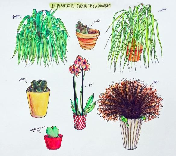 Les plantes de ma chambre